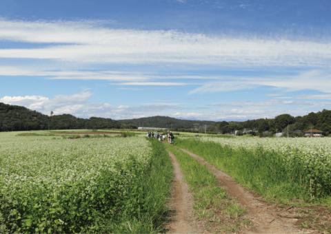 photo: ※募集終了 丹波篠山(大山地区)の風土・風景を読み解く 野外調査+ワークショップ
